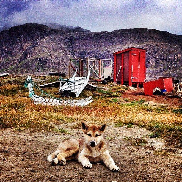arctic husky greenland