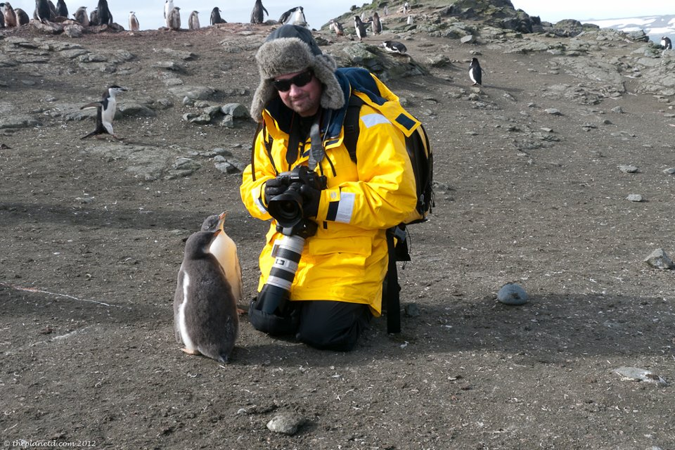 Dave antarctica with penguins