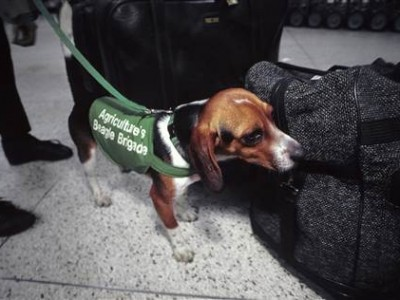 dogs at airport security