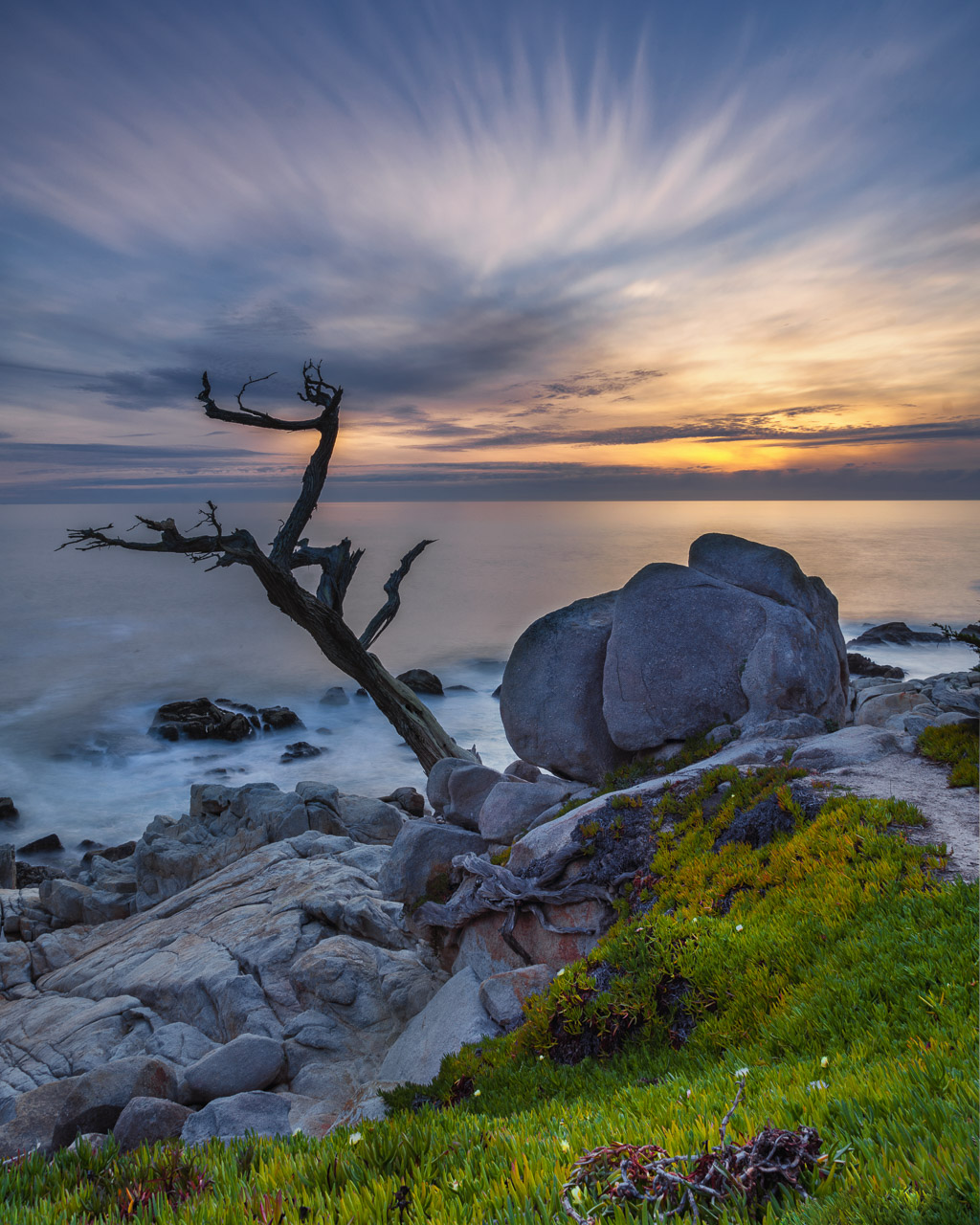 The Ghost Tree on 17 Mile Drive