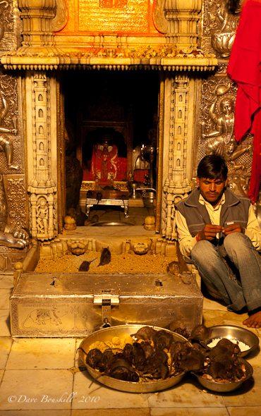 Karni Mata-Rats-Rajasthan-India-4