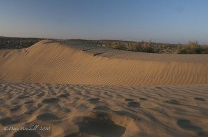 Thar Desert in Jasailmer Rajasthan India