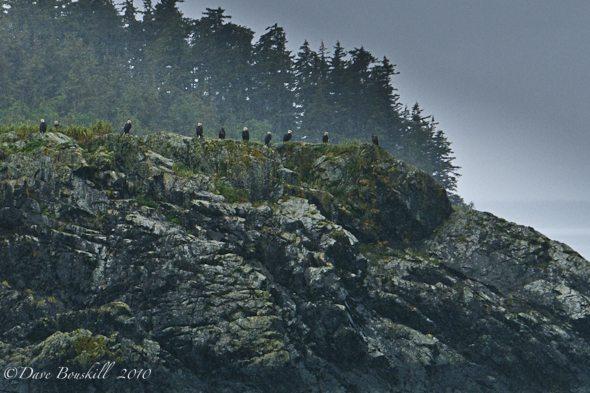 Alaska-Juneau-Whale-Watching-Bald-Eagle-clan