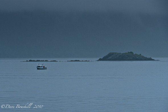 Whale Watching In a Very Wet Juneau, Alaska