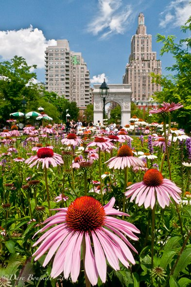 New York City-Washington Square Park