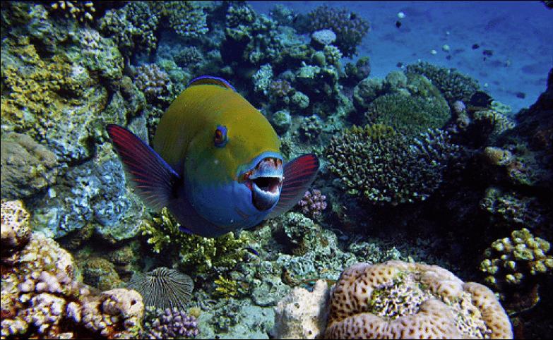el gouna coral reef