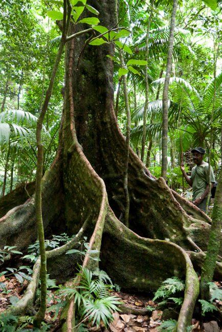 st-kitts-mount-liamuiga-vegetation