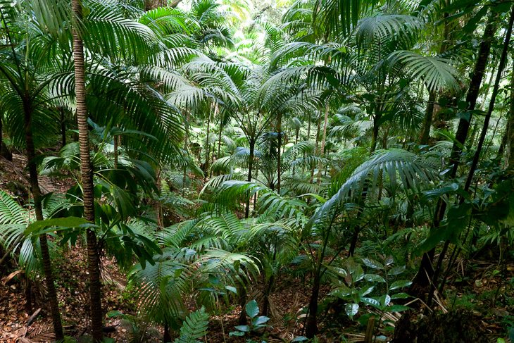 rainforest-mount-liamuiga-st-kitts
