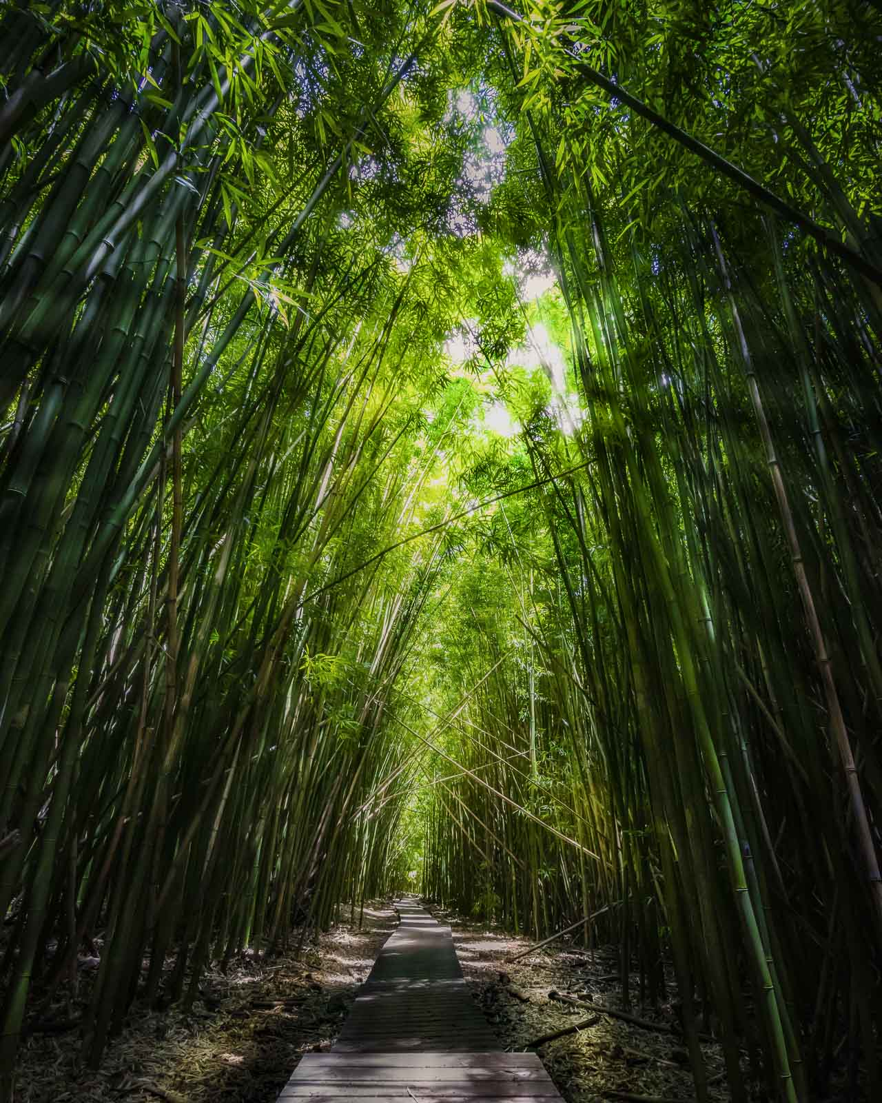 Bamboo Forest in Maui