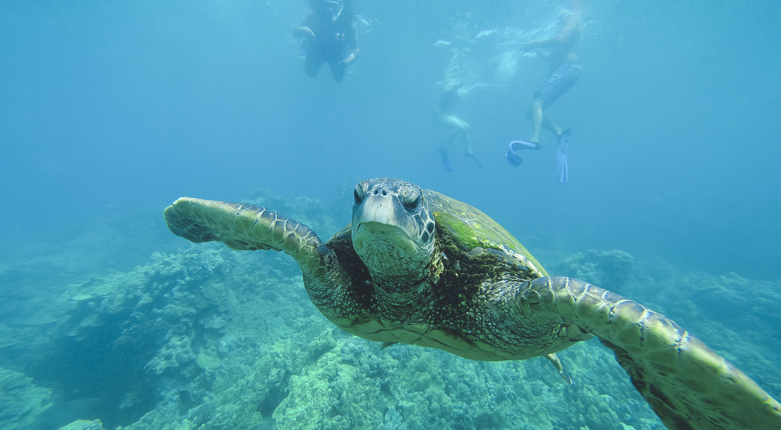 Snortkel with Sea Turtles in Maui