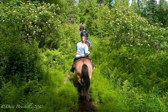 horseback riding alaska