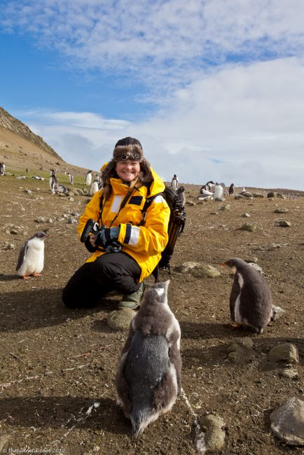 Antarctica-penguins-wildlife-1