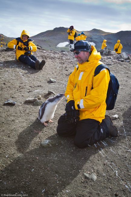 Antarctica-penguins-wildlife-2