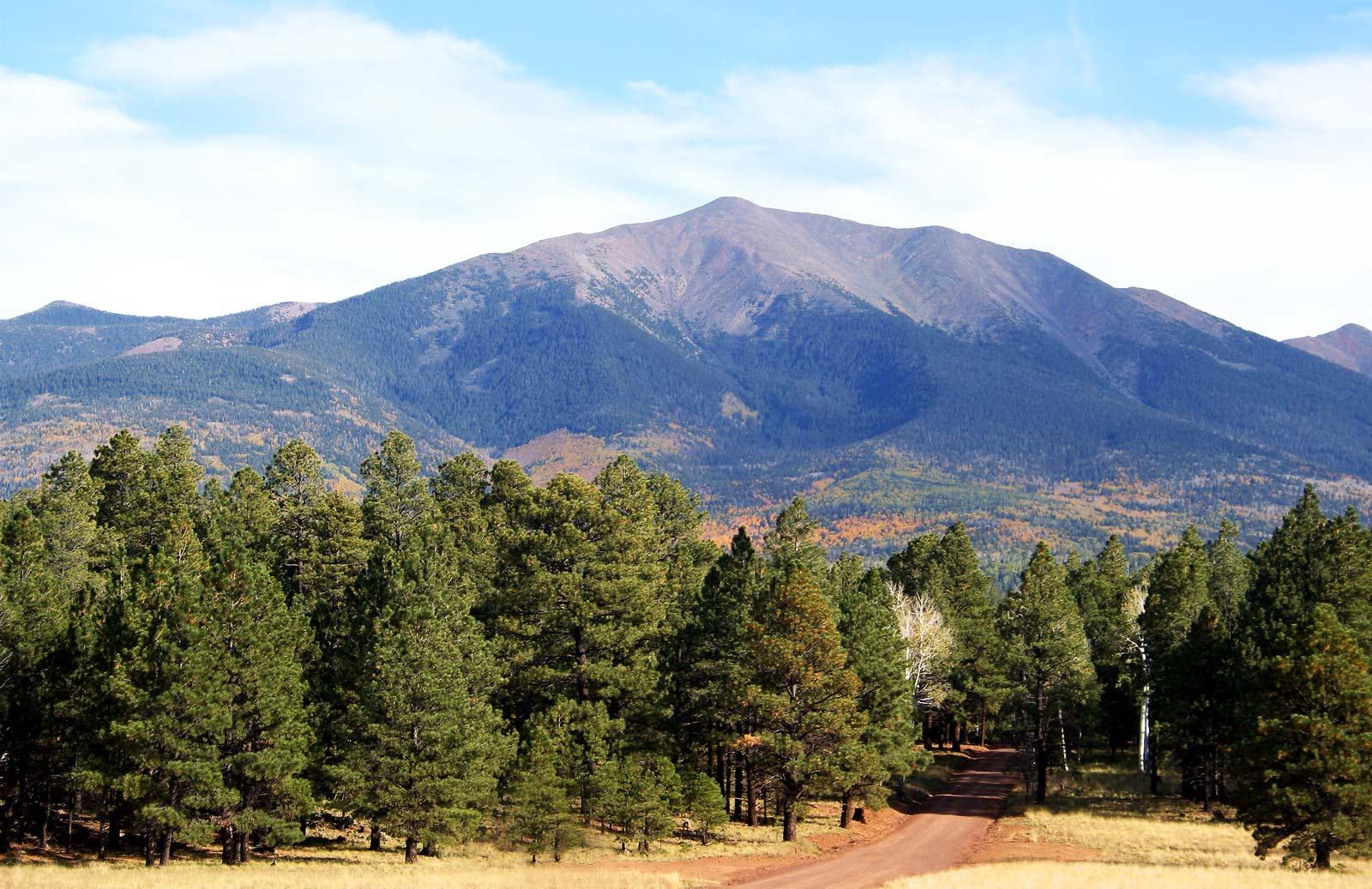 Humphreys Peak Hike in Arizona