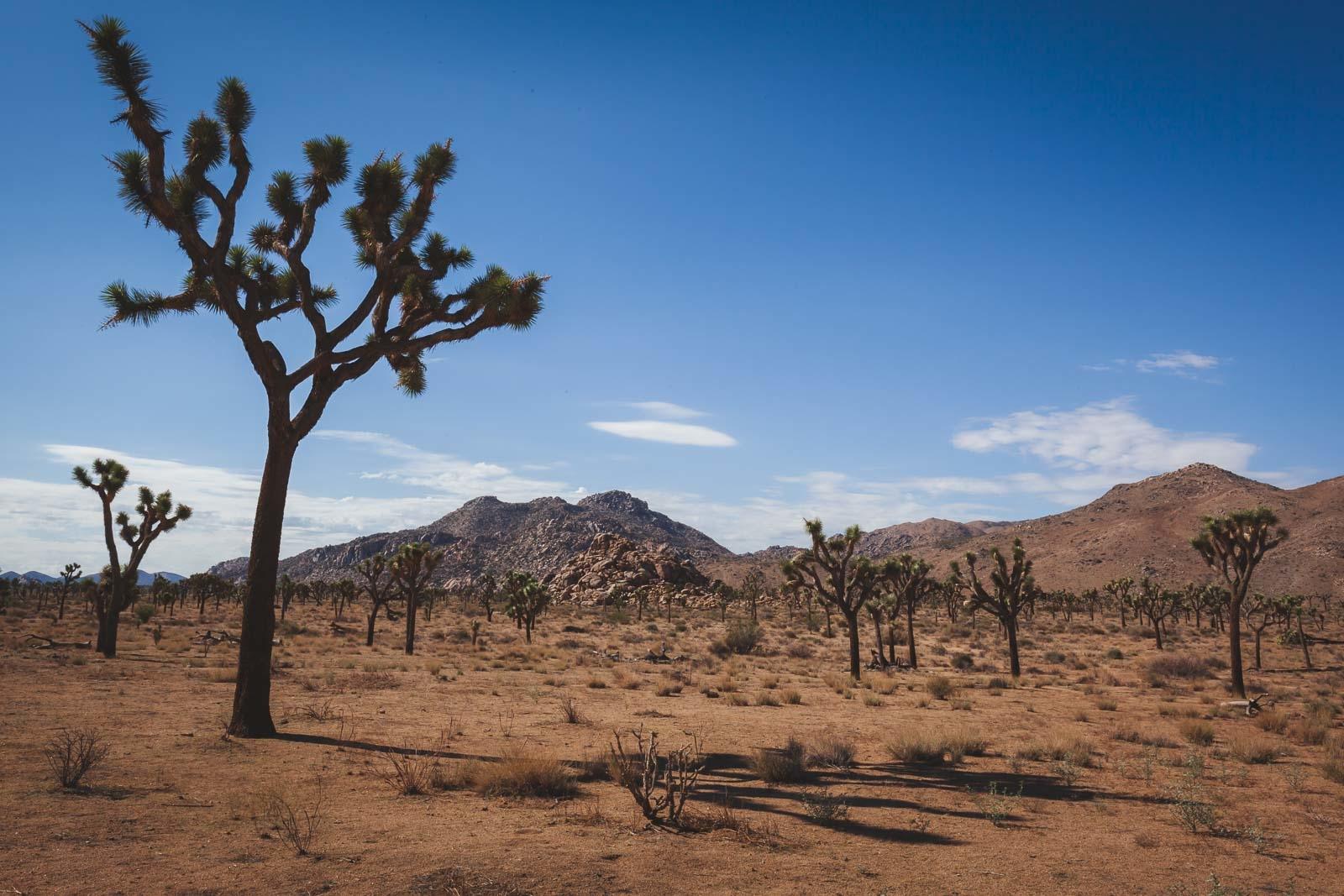 Best Hikes in Joshua Tree