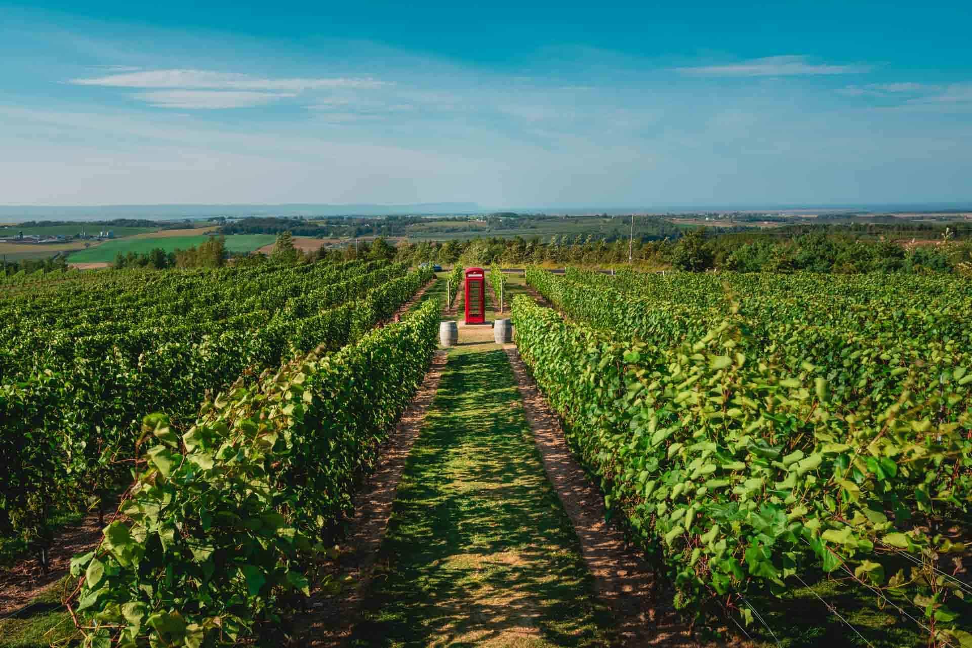 Visiting Nova Scotia Wineries