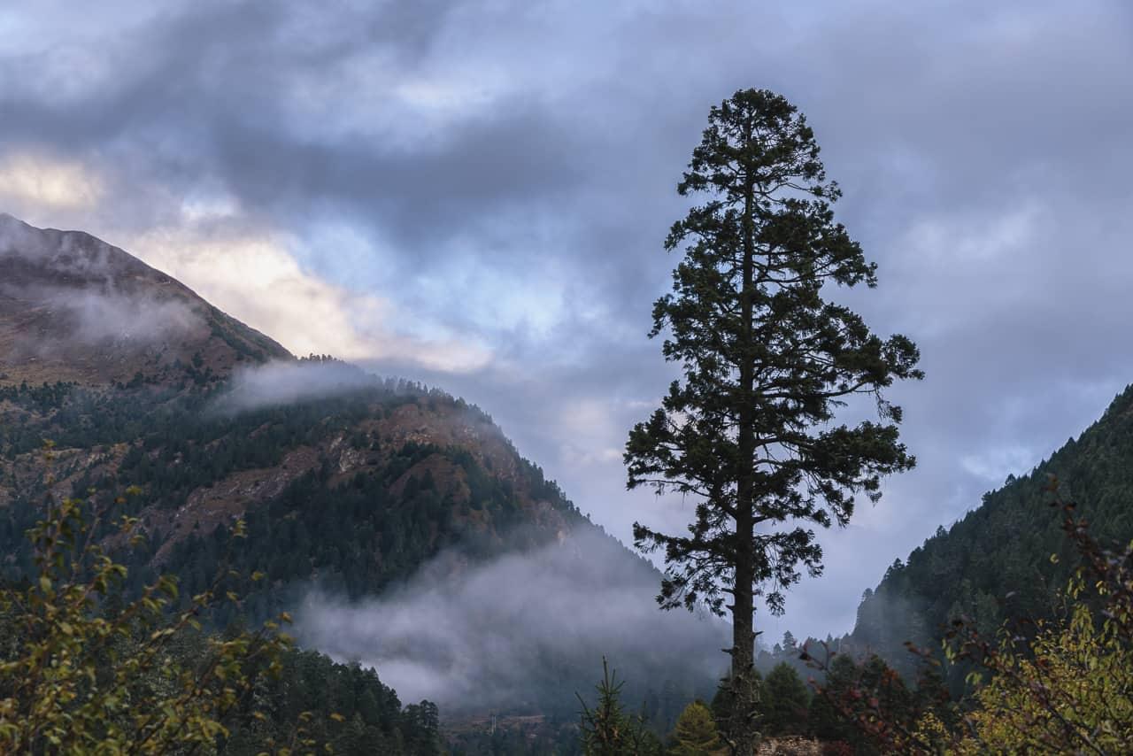 misty morning on bhutan trek