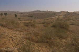 Thar Desert in Bikaner India