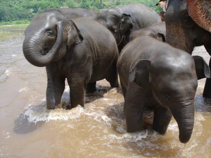 baby elephants Chiang Mai