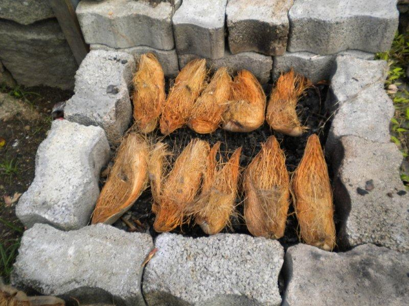 coconut husks on the grill
