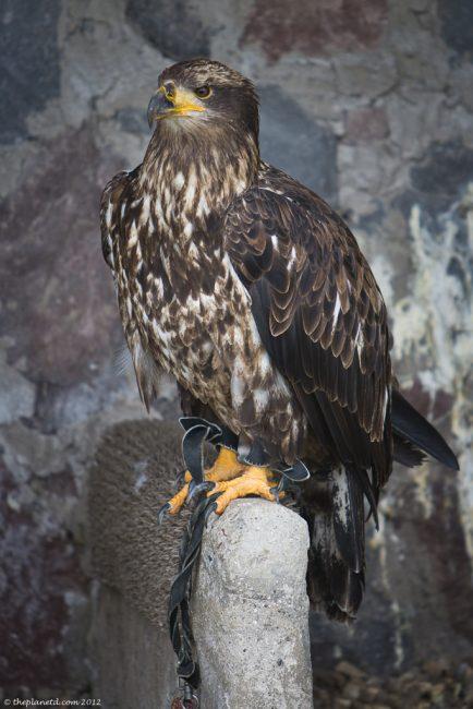 Condors-ecuador-otavalo-4