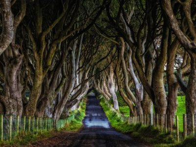 The Dark Hedges of Northern Ireland – Tips to Visit and What you Need to Know