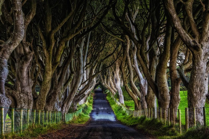 best pictures of ireland dark hedges