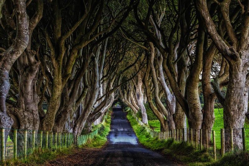 Dark-Hedges-Ireland