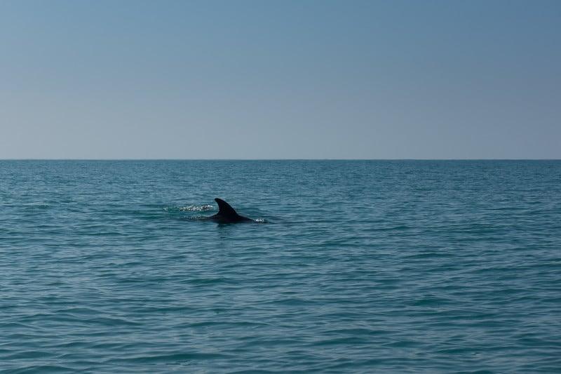 dolphin-watching-things-to-do-in-jamiaca