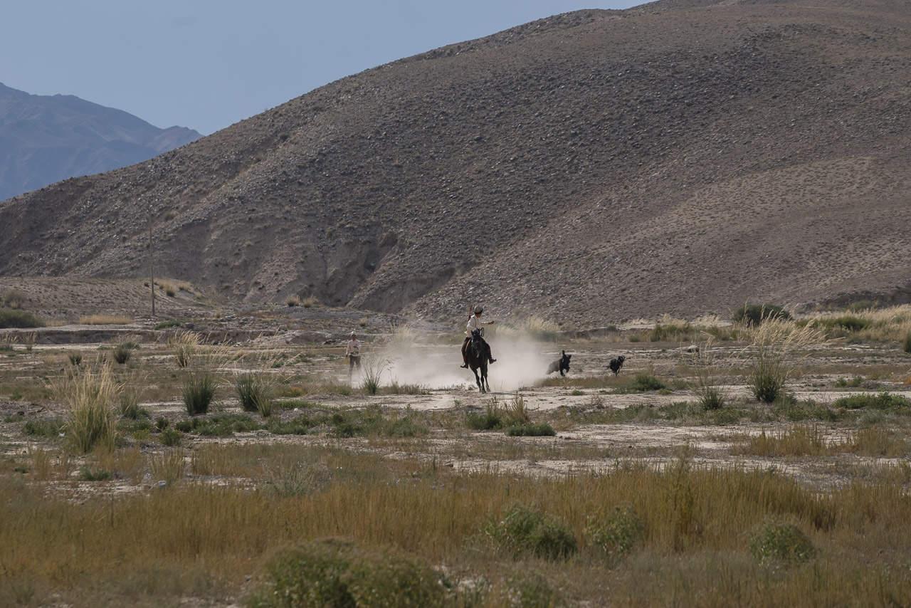 Eagle-Hunters-Kyrgyzstan-dog-hunting