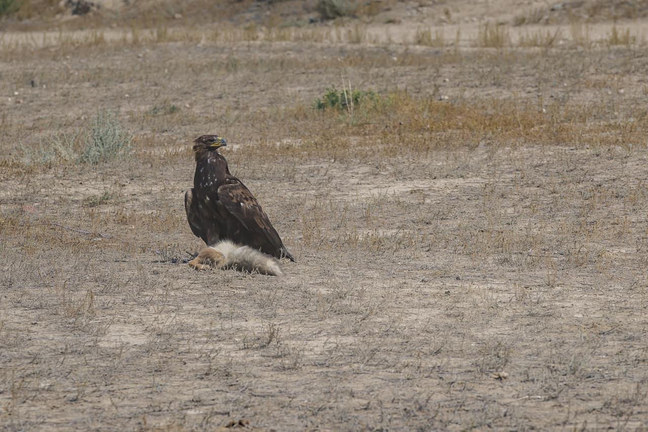 Eagle-Hunters-Kyrgyzstan-9