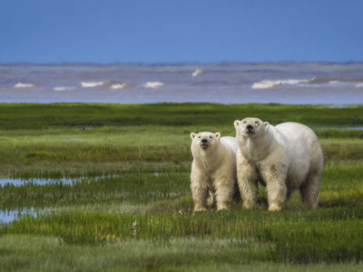 Happy Earth Day – Celebrating Animals of the World in Photos