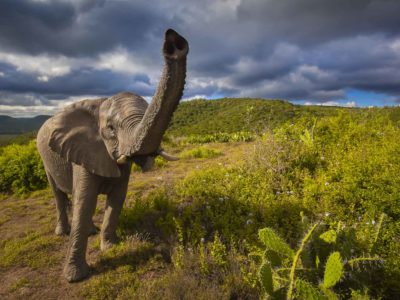 African Animals – Incredible moments on Safari