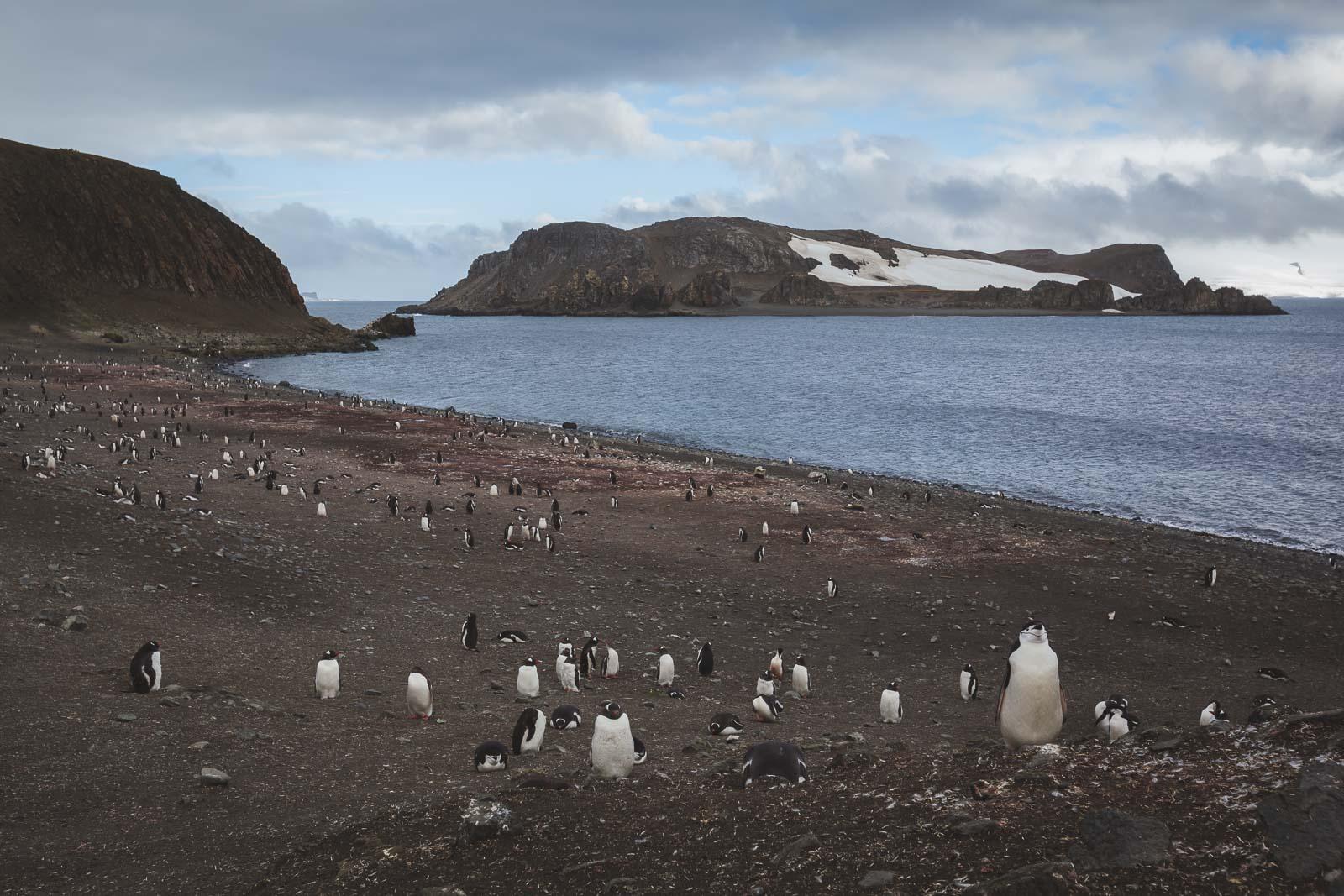 Antarctica Not Always Icy