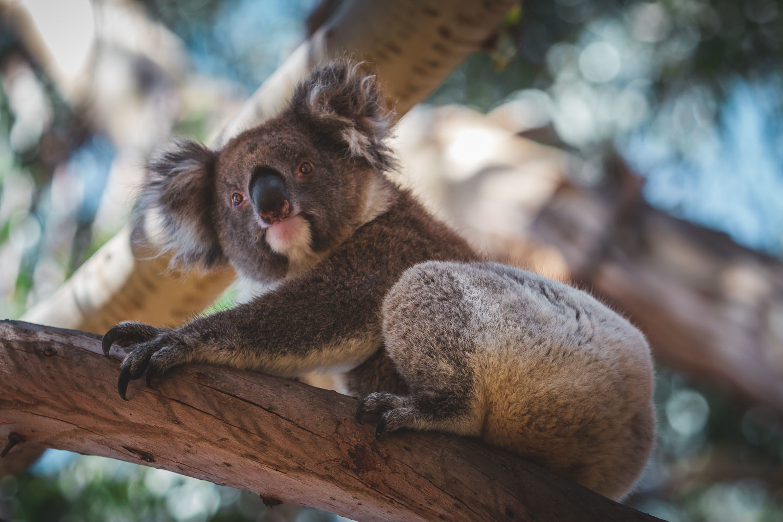 Facts about Australian Animals