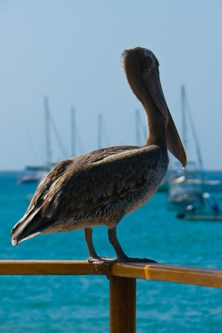 Galapagos Active tour-13