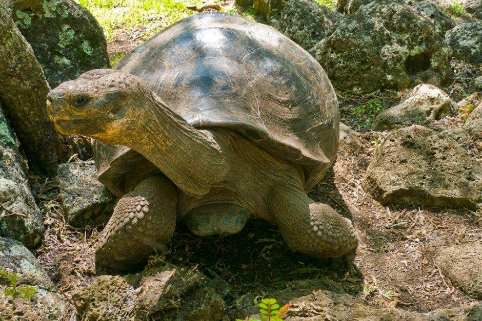 Galapagos Active tour-22