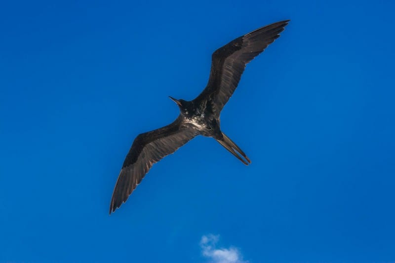 wildlife in the Galapagos Islands - a tern