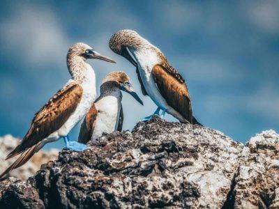 Unique Galapagos Islands Animals in Photos
