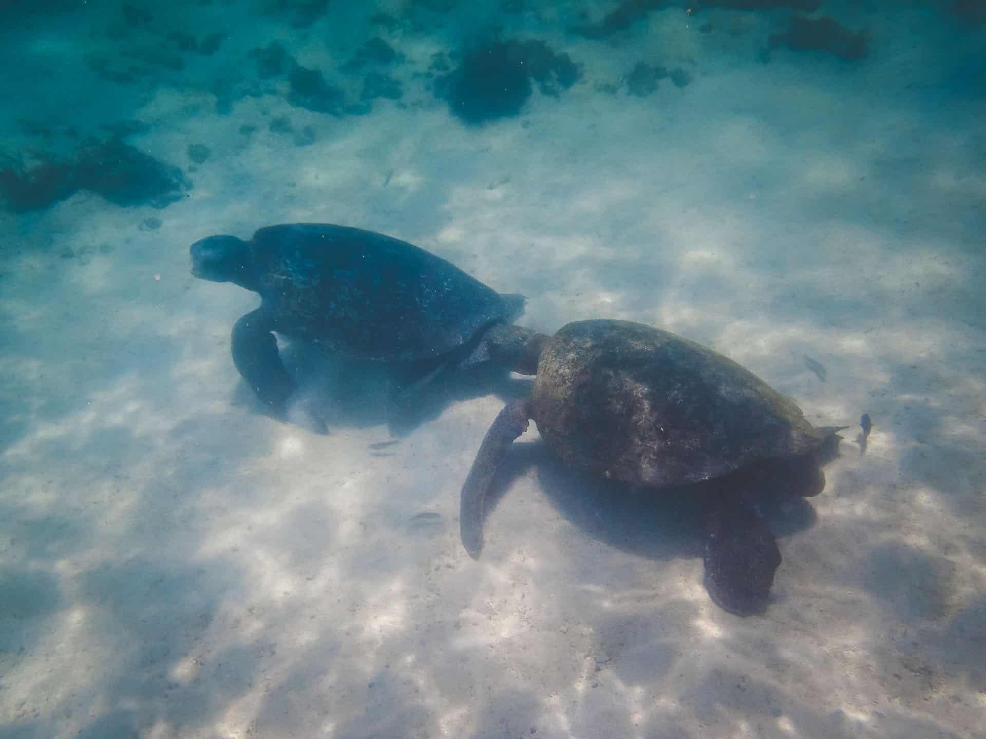 galapagos islands marinelife sea turtles