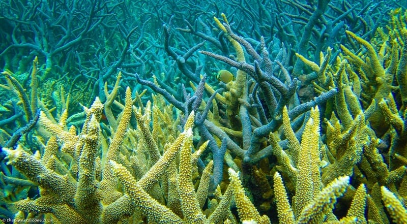Stunning Coral on the Great Barrier Reef
