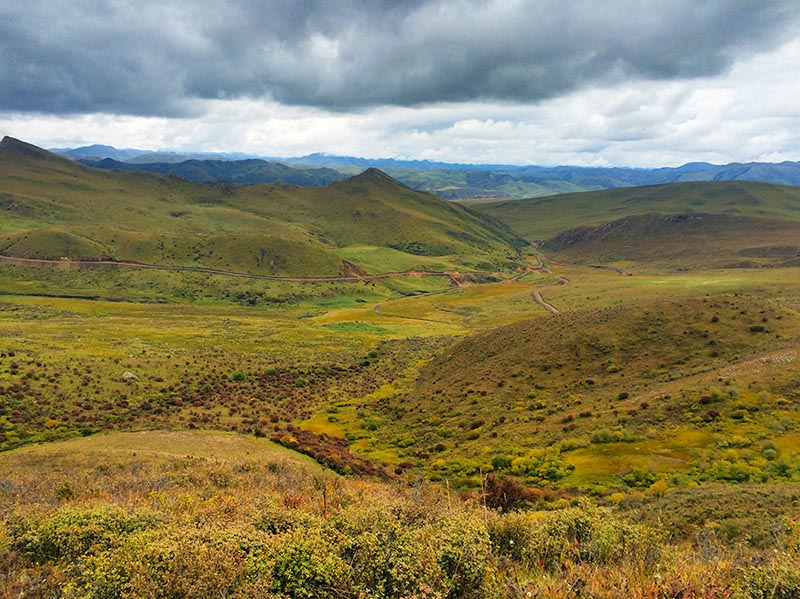 In Search of Wildlife and the Chinese Mountain Cat on the Tibetan Plateau