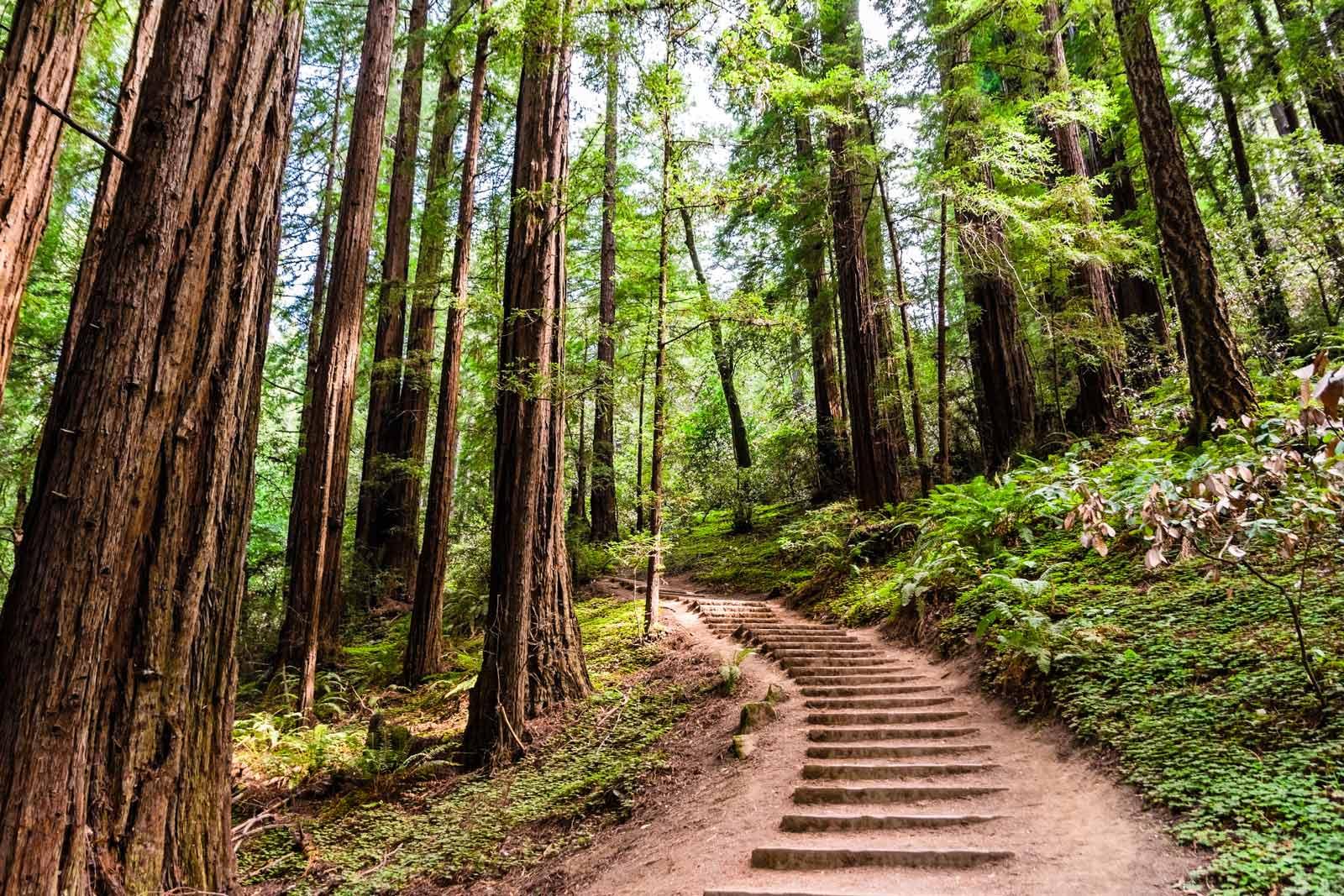 Muir Woods in San Francisco Hiking