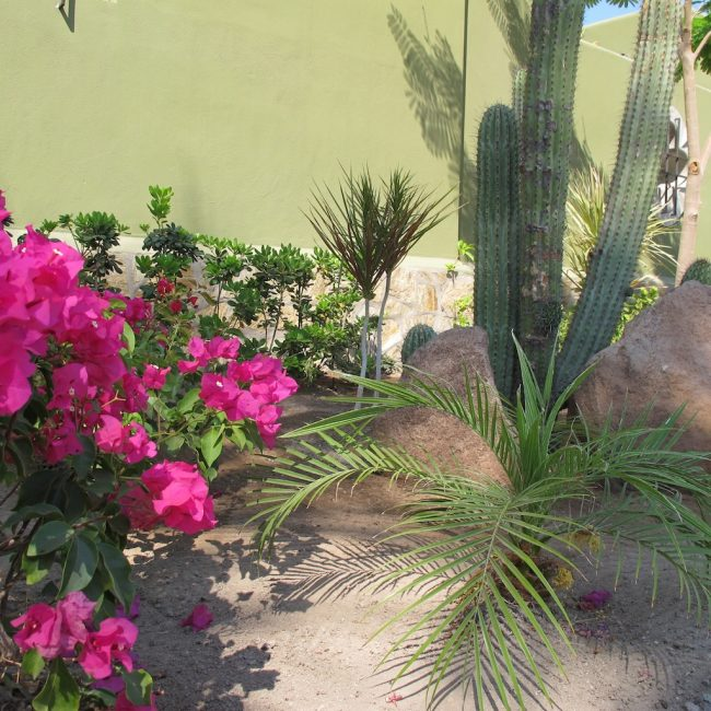 mexico in photos cactus