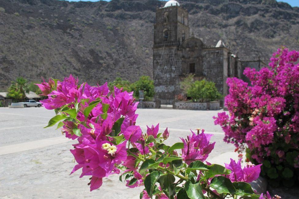 flowers mexico photos