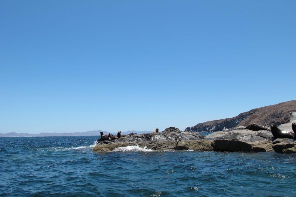 mexico photos sea lions on shore