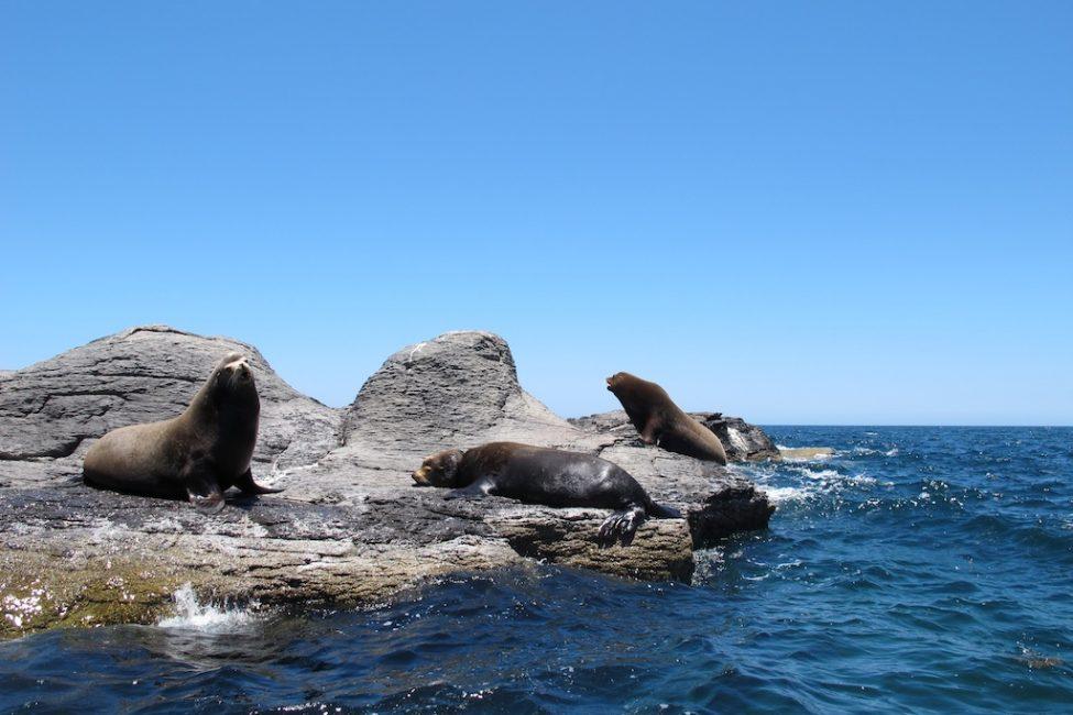 photos mexico sea lions sleeping