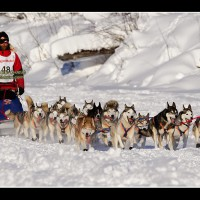 epic adventures dog sledding