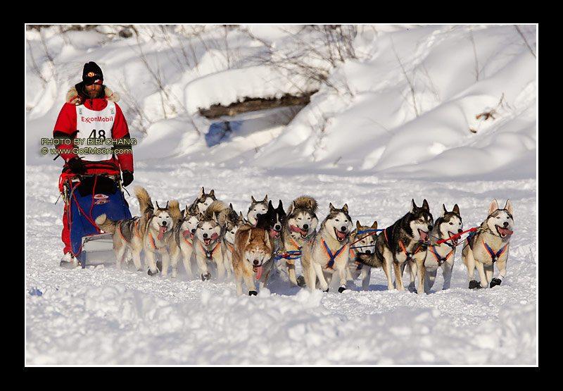 epic adventures dog sledding