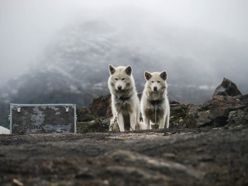 Ilulissat Glacier Greenland dog camp